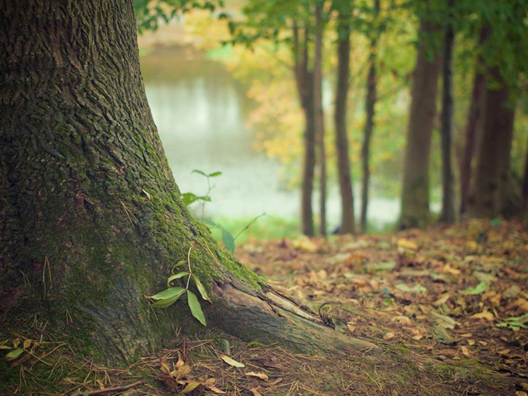 Tend to your yard with tree maintenance services