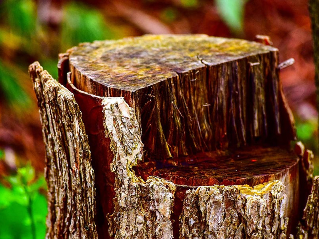 Discover the importance of stump removal for your lawn